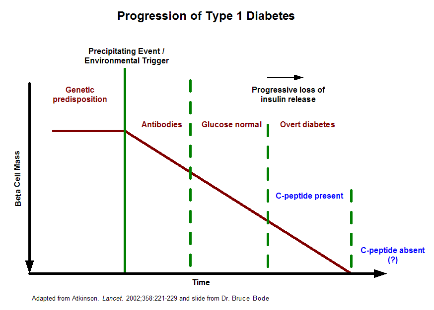 This graph illustrates the progression of islet mass loss that leads to overt type 1 diabetes.